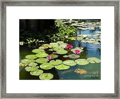 Wishes Among The Water Lilies Framed Print by Methune Hively