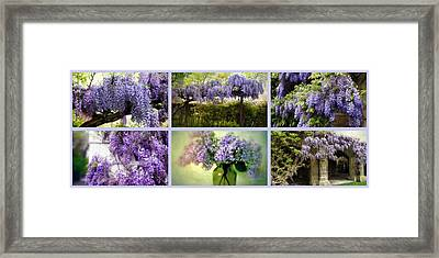 Wisteria Collection Framed Print by Jessica Jenney