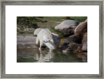 Wolf Framed Print by Kevin Bone