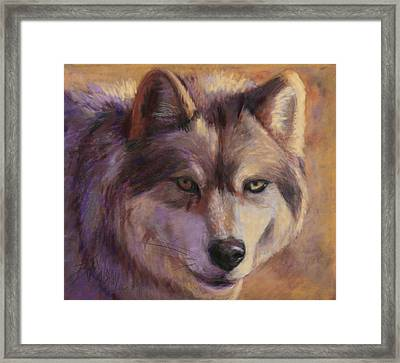 Wolf Study Framed Print by Billie Colson