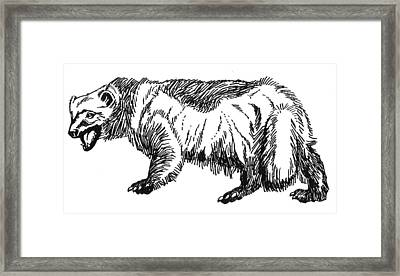 Wolverine Framed Print by David Burkart