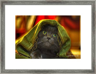 Wonder Framed Print by Joann Vitali