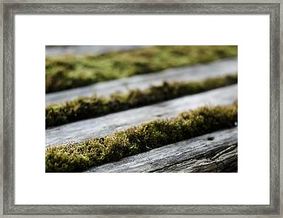 Wood And Vegetal Framed Print by Marcio Faustino