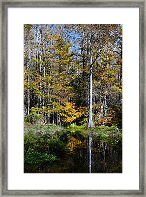 Wood Duck Pond Framed Print by Melanie Moraga