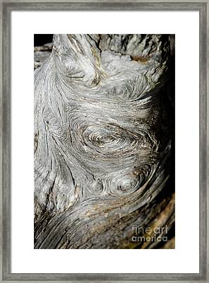 Wooden Fingerprint Eddies In The Grain Of An Old Log Like Whorls On A Finger Framed Print by Andy Smy