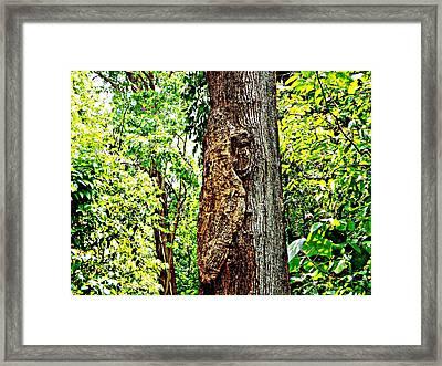 Woodpecker Tree Framed Print by Piety Dsilva