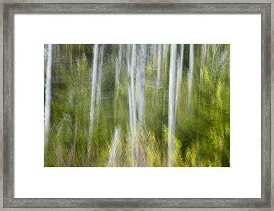 Woods Abstact Framed Print by Andrew Soundarajan