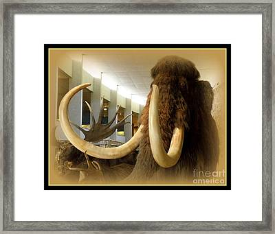 Wooly Mammoth Framed Print by Lainie Wrightson