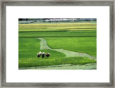 Worker In Conical Hat Walking Through Framed Print by Axiom Photographic