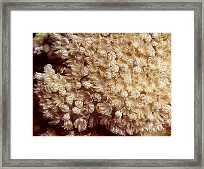 Xenia Coral Pulsing Framed Print by Serena Bowles