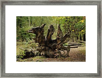 Y Ddraig Pren Framed Print by Paolo Marini