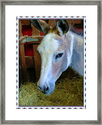 Yahoo The Mule Framed Print by Mindy Newman