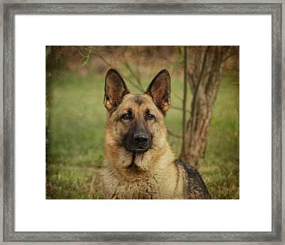 Yahtzee - German Shepherd Framed Print by Sandy Keeton
