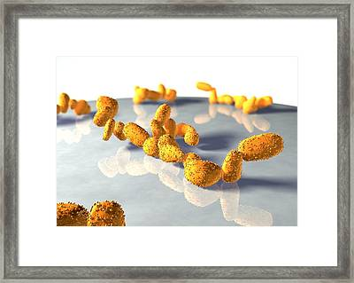 Yeast Cells Framed Print by David Mack