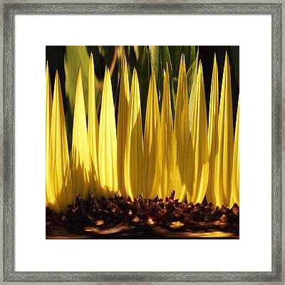 Yellow 5 Framed Print by Skip Nall