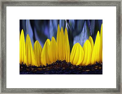 Florida's State Wildflower Framed Print by Skip Nall