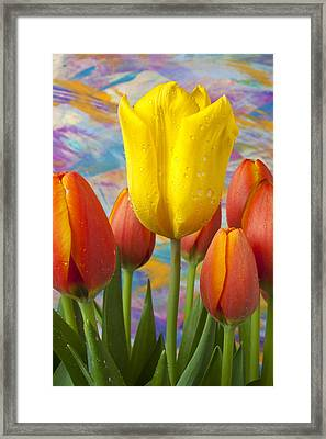 Yellow And Orange Tulips Framed Print by Garry Gay