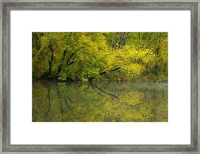 Yellow Autumn Framed Print by Karol Livote