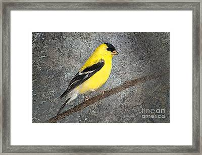Yellow Framed Print by Betty LaRue