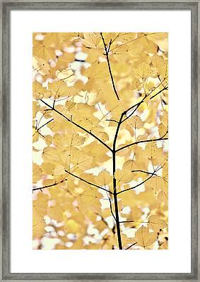 Yellow Brown Leaves Melody Framed Print by Jennie Marie Schell