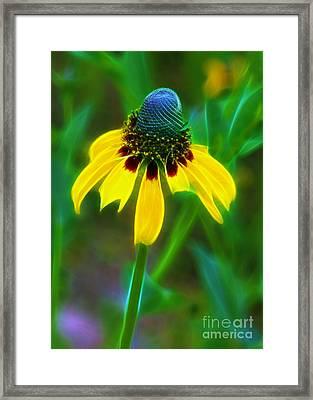Yellow Coneflower Framed Print by Judi Bagwell