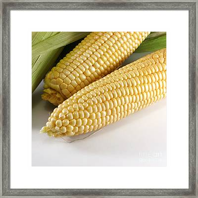 Yellow Corn Framed Print by Blink Images