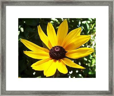 Yellow Daisy Framed Print by Tanya Moody