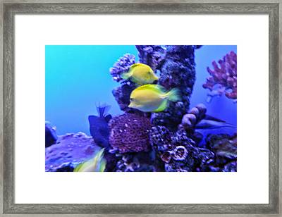 Yellow Fish With Purple Coral Framed Print by Linda Phelps