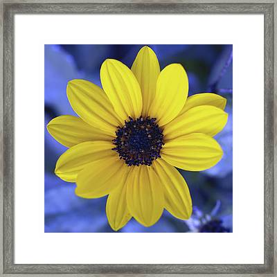 Yellow Flower 3 Framed Print by Skip Nall
