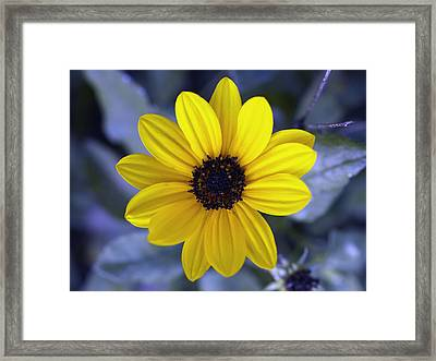 Yellow Flower 4 Framed Print by Skip Nall