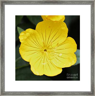Yellow Flower Framed Print by Artie Wallace