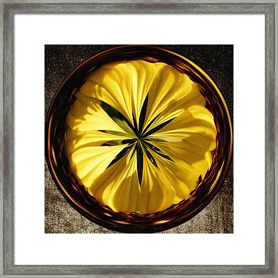 Yellow Flower Framed Print by Skip Nall