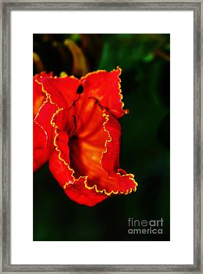Yellow Frills - African Tulip Tree Flower Framed Print by Kaye Menner