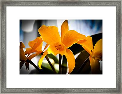 Yellow Magic Framed Print by David Patterson