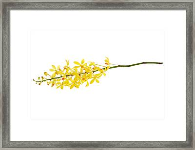 Yellow Orchid Bunch Framed Print by Atiketta Sangasaeng