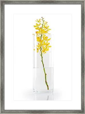 Yellow Orchid In Vase Framed Print by Atiketta Sangasaeng