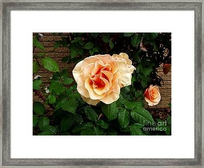 Yellow Peach Surprise  Framed Print by The Kepharts