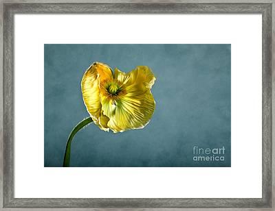 Yellow Poppy Framed Print by Nailia Schwarz