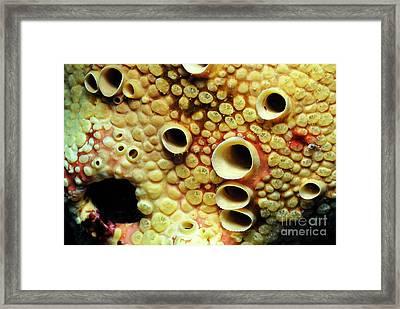 Yellow Sponge Holes Framed Print by Sami Sarkis