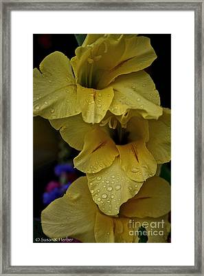 Yellow Trio Framed Print by Susan Herber