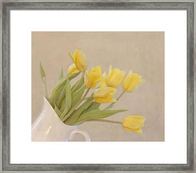 Yellow Tulips Framed Print by Kim Hojnacki