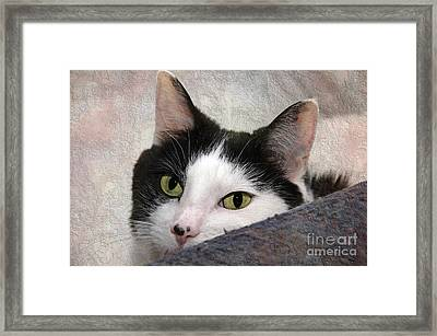 Yes I Took Her Chair Framed Print by Andee Design