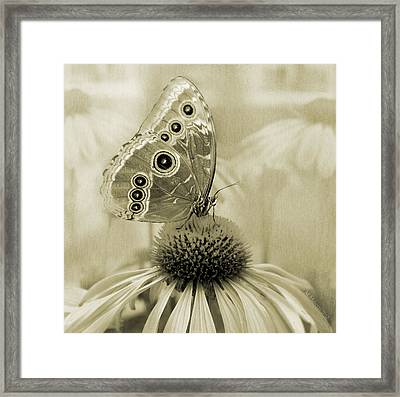 Yesterday's Visitor Framed Print by Melisa Meyers