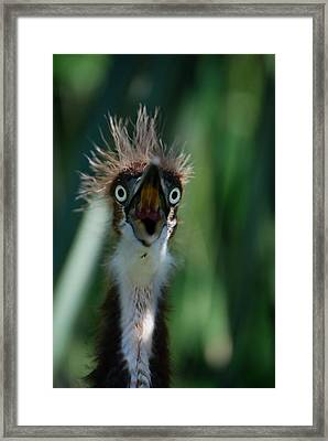 Yikes Framed Print by Skip Willits
