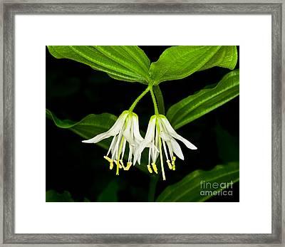 Yoho - Roughfruit Fairybells Framed Print by Terry Elniski