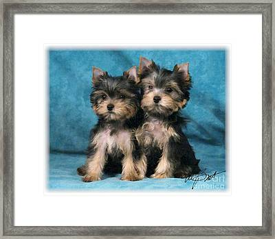 Yorkshire Terrier Pups 2 Framed Print by Maxine Bochnia