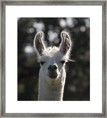 You Talkin To Me ? Framed Print by Kelly Rader