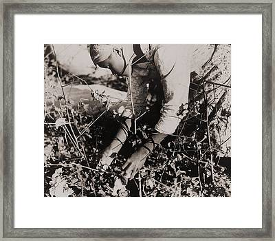 Young African American Women Picking Framed Print by Everett