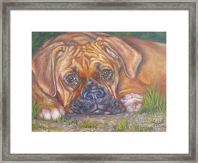 Young Boxer Framed Print by Gayle Rene