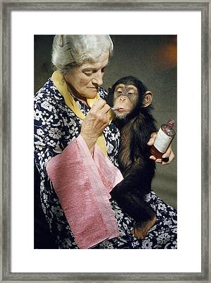Young Chimpanzee Sips Medicine Framed Print by B. A. Stewart And David S. Boyer
